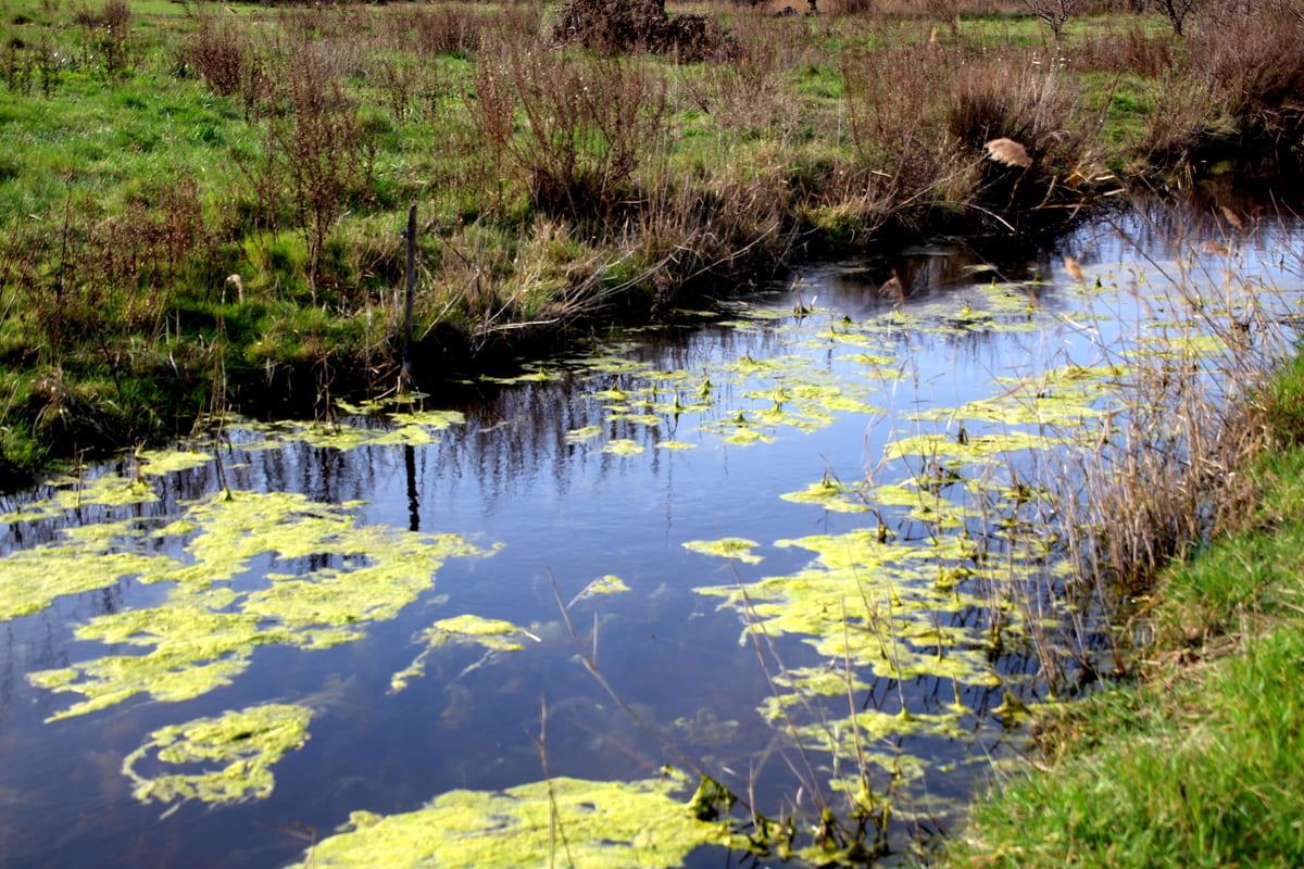 canal Villeneuve les Maguelone location villa tout confort Prades le lez location saisonnière maison vacances