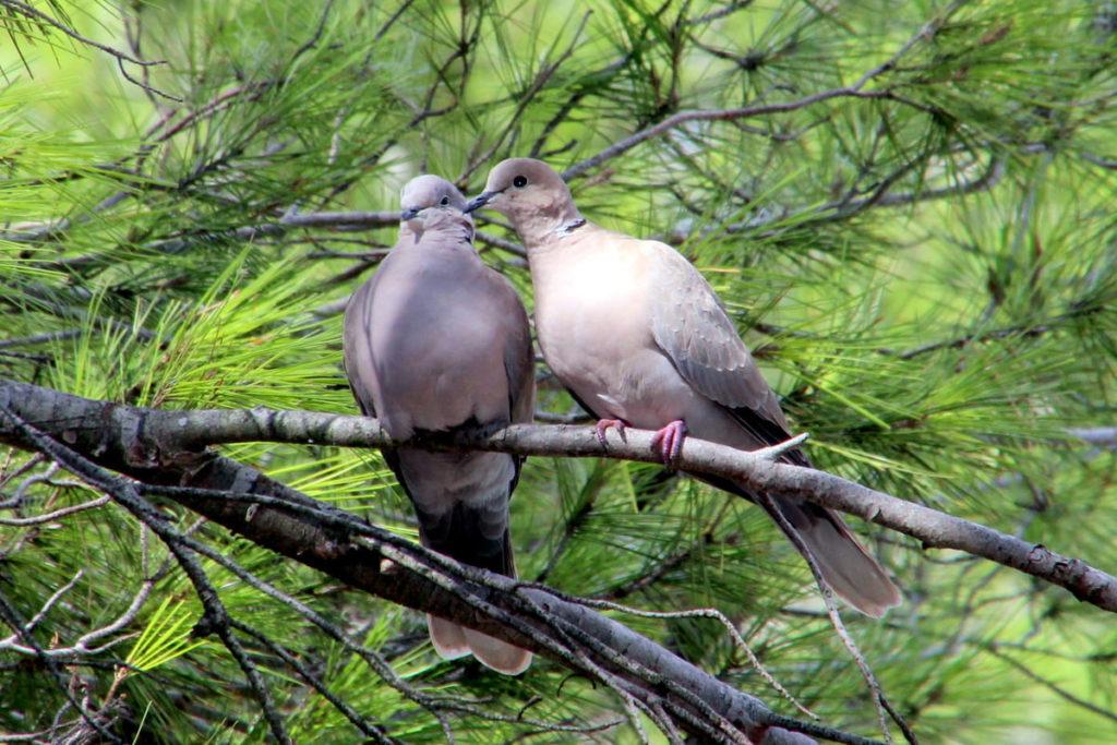 oiseaux jardin environnement calme nature environnement villa location Montpellier détente séjour famille